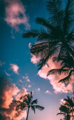 Background Palm Tree Wallpaper